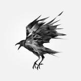 Getrokken vliegende zwarte kraai Royalty-vrije Stock Afbeelding
