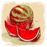 Getrokken watermeloenhand Illustratie Stock Illustratie