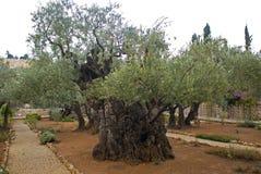 Getsemani Garden, Jerusalem, Israel Royalty Free Stock Image