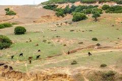 Getter Tunisien Arkivfoton