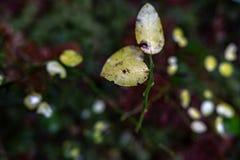 Getti su una mattina della primavera fotografia stock