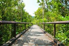 Getti un ponte sul passaggio pedonale concreto con l'albero nel parco pubblico fotografie stock libere da diritti