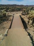 Getti un ponte sul percorso attraverso il giardino di salto del cactus di cholla in Joshua Tree National Park Fotografia Stock Libera da Diritti