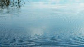 Getti una pietra in un lago Cerchio dell'ondulazione sul lago stock footage