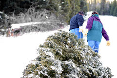 Getting the christmas tree. Christmas tree - husband and wife having cut down their own tree are pulling it out of the forest. blown highlights in snow, focus on Royalty Free Stock Photo