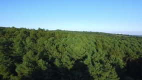 Getting close to the woods. An aerial shot of green trees from the woods as the drone gets closer to the trees stock footage