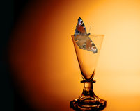 Getting nervous. A still life with a peacock butterfly in an old crystal dram glass with warm red colours in the background royalty free stock photos