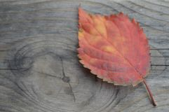 Getting old autumn colors royalty free stock image
