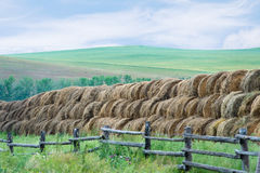 Getting ready for winter. Dry hay rolled and stacked at field stock photography