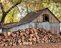 Getting Ready for Winter. An old barn with a large pile of firewood stacked in front during fall Royalty Free Stock Photos