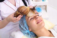 Getting snail skin cleaning at beauty salon. Stock Image