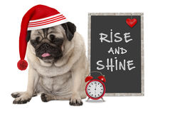Getting up in early morning, grumpy pug puppy dog with red sleeping cap, alarm clock and sign with text rise and shine Royalty Free Stock Image