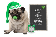 Getting up in early morning, grumpy pug puppy dog with sleeping cap, alarm clock and sign with text rise and shine is no hobby of Stock Photos