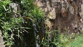 Getto fresco e chiaro di acqua fra le erbe video d archivio