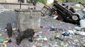 Getto och slumkvarter i Delhi Indien royaltyfria foton