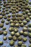 Getty center kaktusträdgård Arkivbilder