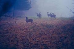 Gettysburg, PA/США декабрь: 2018: Небольшой табун белых замкнутых оленей стоя в луге с осенью на том основании стоковая фотография