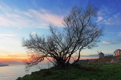 Getxo at sunset with tree silhouette Stock Photos
