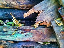 Geur van hout Stock Afbeelding