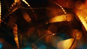 Geur van Kerstmisspar stock videobeelden