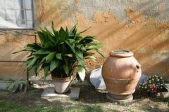 Geur van Toscanië Royalty-vrije Stock Foto's