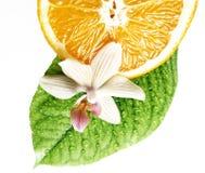 Geur van tropische geïsoleerdB fruit en bloem stock foto's