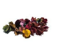 Geurige bloemen al geïsoleerde kleur Stock Foto's