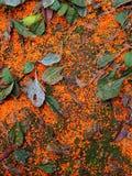 Geurige osmanthus Stock Afbeelding