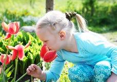 Geurige tulp Royalty-vrije Stock Afbeeldingen