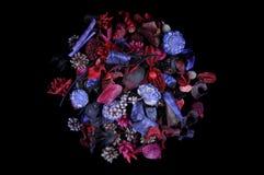 Geurige vruchten en kruiden Stock Afbeelding