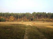 Gevär för USA-armé i den Kaefertal skogen, Tyskland Royaltyfria Foton
