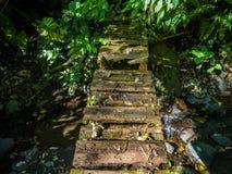 Gevaar gebroken plankbrug in tropisch bos stock foto