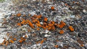 Gevaarlijk afval Stock Foto