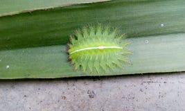 Gevaarlijk insect Stock Afbeeldingen