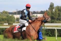 Gevaarlijk schijnsel - paardenrennen in Praag stock afbeelding