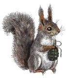 Gevaarlijke eekhoorn Stock Afbeelding