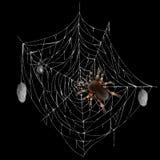 Gevaarlijke giftige spin op Web realistische vector royalty-vrije illustratie