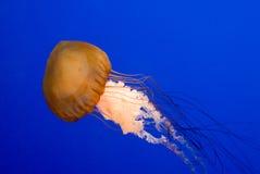 Gevaarlijke zwemmer Royalty-vrije Stock Foto's