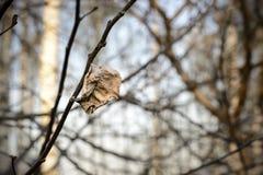 Gevallen aan de grond vergeelde esdoornbladeren in de herfstseizoen Kleine diepte van gebied Het gebladerte verlichtte backlit zo Royalty-vrije Stock Foto