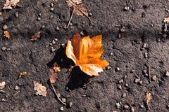 Gevallen blad in de herfst op een geweven grond Royalty-vrije Stock Afbeeldingen