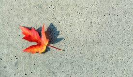Gevallen blad met typische de herfstkleuren royalty-vrije stock afbeelding