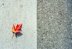 Gevallen blad met typische de herfstkleuren royalty-vrije stock afbeeldingen