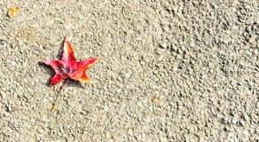 Gevallen blad met typische de herfstkleuren royalty-vrije stock foto's