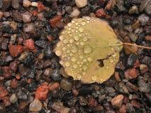 Gevallen blad met waterdruppeltjes Stock Afbeelding