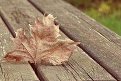 Gevallen blad op een houten picknicklijst Stock Fotografie
