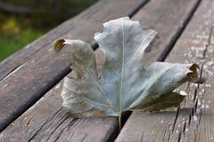 Gevallen blad op een houten picknicklijst Stock Afbeelding