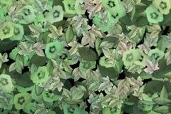 Gevallen bladeren Stock Foto's