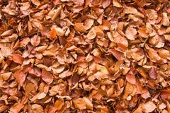 Gevallen bladeren Stock Afbeeldingen