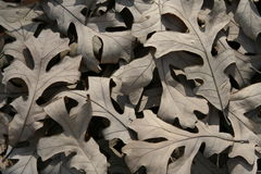 Gevallen bladeren Stock Afbeelding