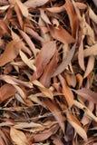 Gevallen bladeren Stock Foto